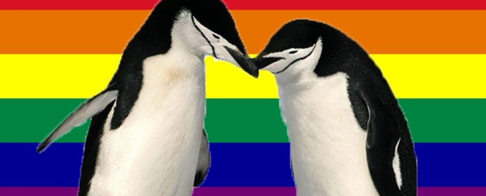 Gay-Flag-Penguins_latte190816