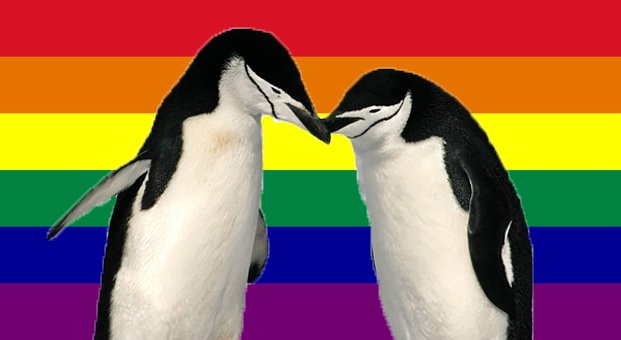 Gay-Flag-Penguins_latte190816
